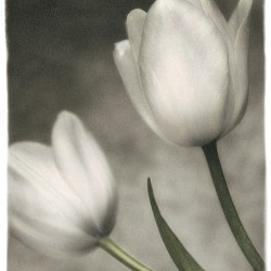 Dianne Poinski - Soft Tulip
