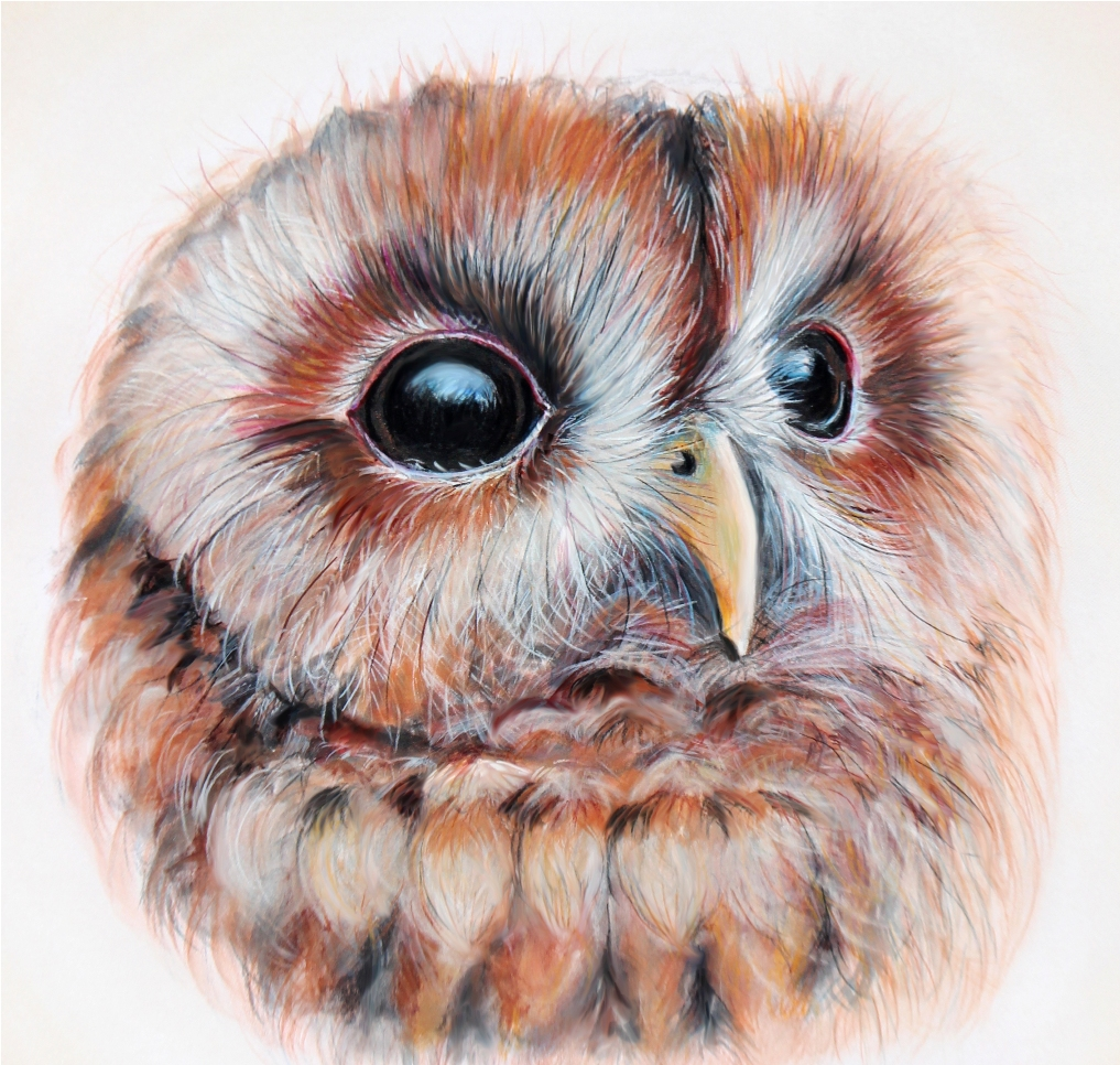 Owl email-3