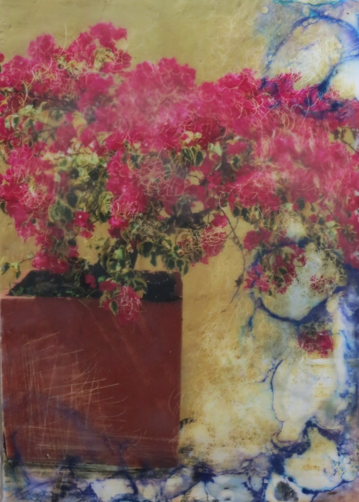 Shary Bartlett bouganvillia colombia